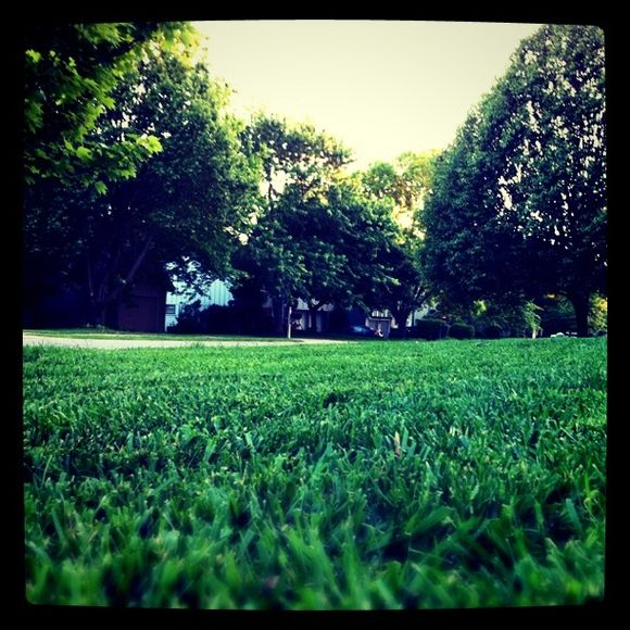 Pic of the Day: Fresh Lawn